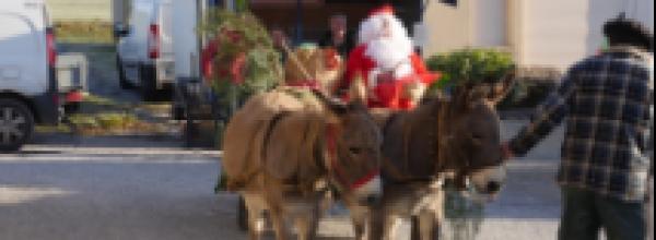 Et les plus beaux Sapins de Noël – 123 Soleil – sont…
